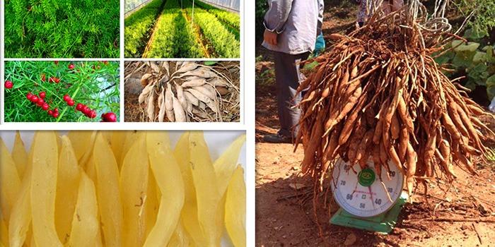 昂可达:云南中药材品种大全