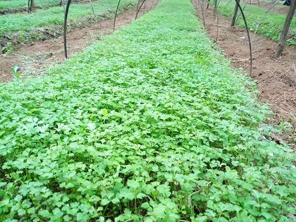 k7娱乐国际种子种苗