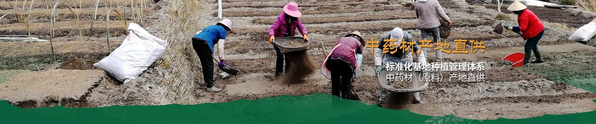 昂可达-标准化基地种植管理体系 中药材(原料)产地直供